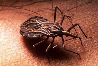 Innovador avance contra el mal de Chagas en Paraguay