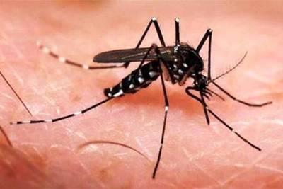 """""""Conociendo al mosquito"""" en escuelas de Central"""
