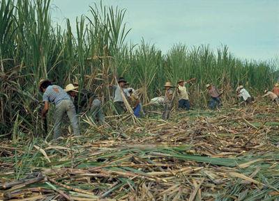Buscan reconversión de la caña de azúcar