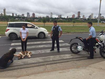 Un conductor atropella a dos perros en la Costanera