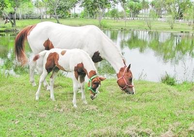 Nutrición en equinos