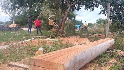 Padres de familias denuncian tala de arboles en una escuela