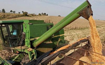 Paraguay buscará aumentar venta de granos en Emiratos Árabes