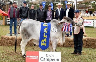Medalla de oro para dos bovinos de Paraguay en concurso internacional