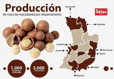 Producción de nuez de macadamia se expande y llega a 1.000 hectáreas