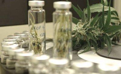 Brasil registra medicamento a base de cannabis