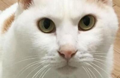La divertida foto del gato con aspecto de huevo frito que la rompe en Internet