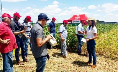 Pronostican 4.000 kg/ha para la soja de Inbio-IPTA