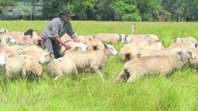 Descarte de animales con baja producción