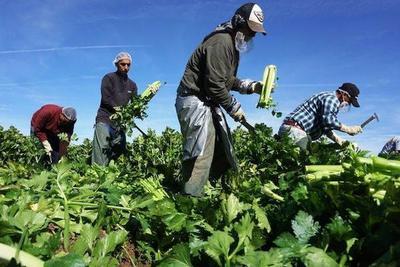 Amenaza a agricultura mundia