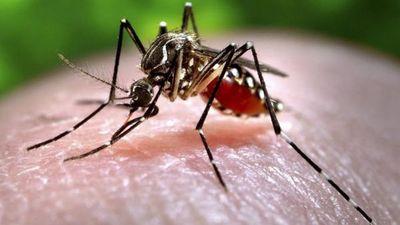 Amenaza de propagación del dengue sigue latente en el país