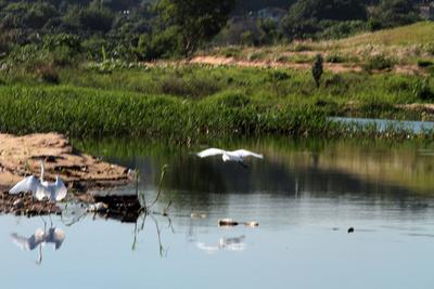 Invitan a participar de la salida de observación de aves en humedales de Río Salado
