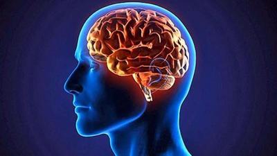 Tecnologías de imagen revelaría profundidades del cerebro