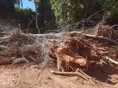 Más de 200 hectáreas deforestadas en San Pedro