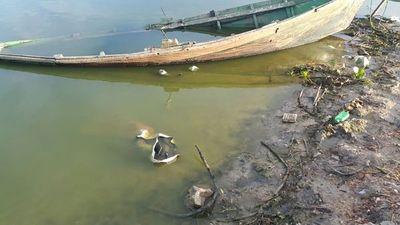 Vertedero municipal estaría contaminando arroyo Calaberita