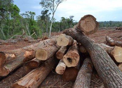 Imputado por deforestación