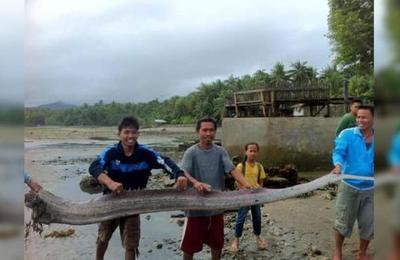 Cada vez que este escalofriante pez aparece, miles creen que se acerca un gran terremoto