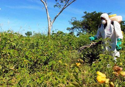 Combaten plaga de langostas en el Chaco