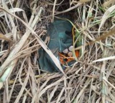 Explosivos encontrados podrían ser utilizados para asalto a caudales