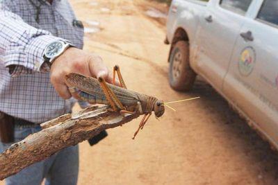 Alerta fitosanitaria genera incertidumbre en el agro