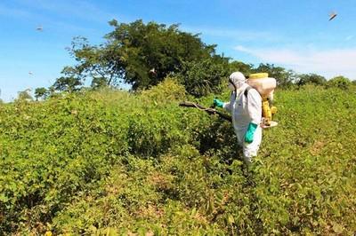 Declaran emergencia fitosanitaria por plaga de langostas en el Chaco