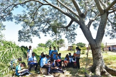 Estudian bajo árboles desde hace 7 años