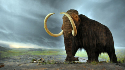 Revelan razones genéticas que extinguieron a los mamuts