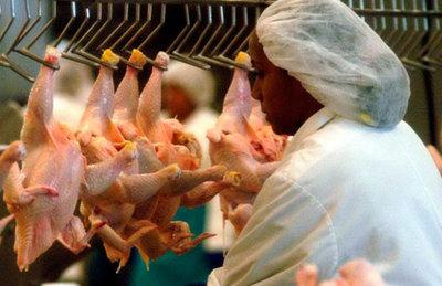 Alertan sobre pollos sin control sanitario