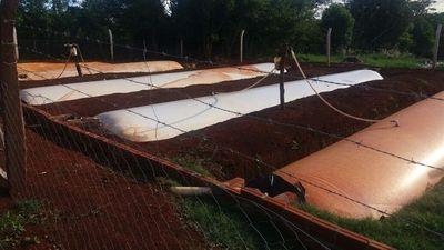 En el Sur producen biogás con estiércol de unos 600 cerdos