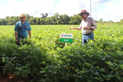 ¡Increible!, nuevo récord de rinde en soja paraguaya