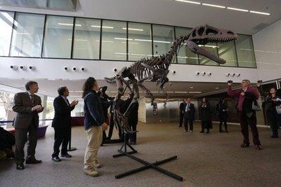Primeros parientes de los dinosaurios eran cuadrúpedos