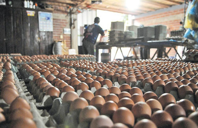 Ingreso de huevos de Argentina afecta a industria local