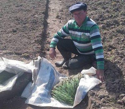 Trabajos para certificación de calidad y trazabilidad de cebollas