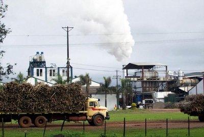 Iturbe, con la azucarera cerrada, apuesta a cultivos alternativos