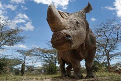 Un rinoceronte mata a un científico húngaro en Ruanda
