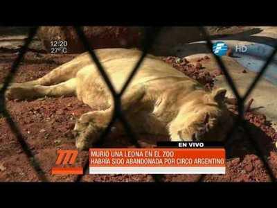 Murió una leona en el Jardín Botánico de Asunción
