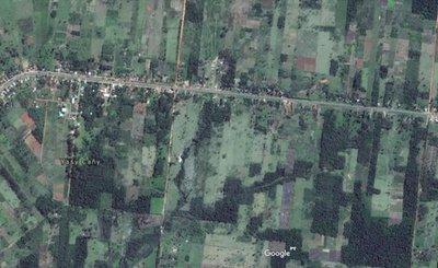 Poblador denuncia deforestación en zona de Yasy Cañy