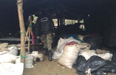Desbaratan centros de producción de marihuana en zona de Amambay