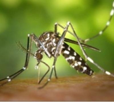 Google pretende lanzar sus mosquitos para acabar con el Aedes aegypti
