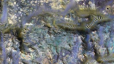 """Imágenes publicadas por la NASA revela unos impresionantes """"gusanos"""" en un cráter de Marte"""