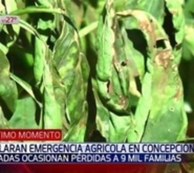 Tras heladas declaran emergencia agrícola en Concepción