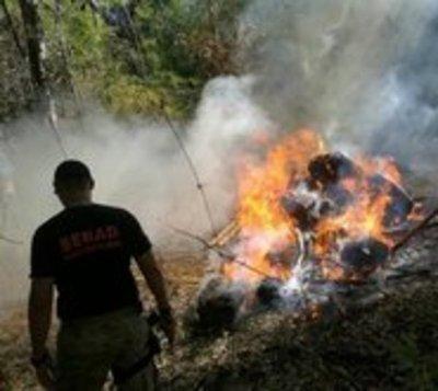 Incautan y queman carca de 5 toneladas de marihuana