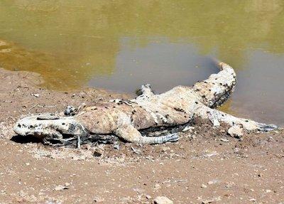Sin el río Pilcomayo, la fauna está condenada a morir en forma natural