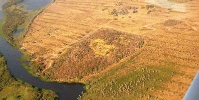 Un promedio de 162 ha.  de bosques desaparecen por día  en el Chaco
