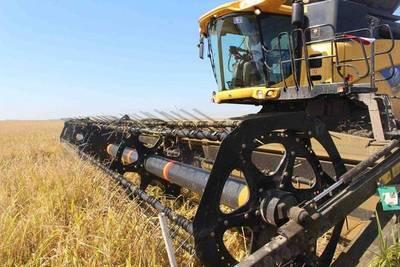 Paraguay exporta arroz al mercado europeo pero lamenta altos aranceles