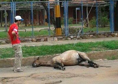 Penas de prisión para los que maltratan animales