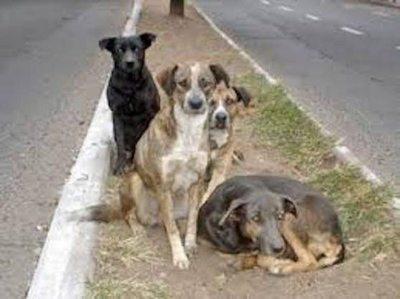 Cárcel para maltratadores de mascotas