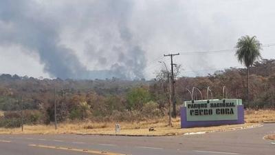 Incendio forestal causa impacto al ecosistema en el Cerro Corá