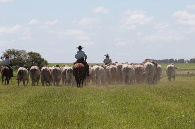 Industria limitada por baja oferta de ganado