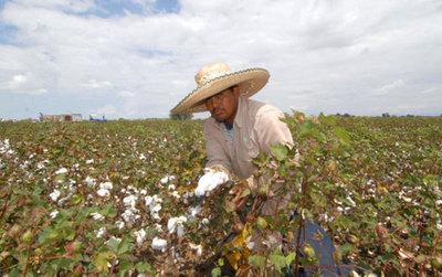 La Ley de Rehabilitación Financiera impulsará la agricultura familiar